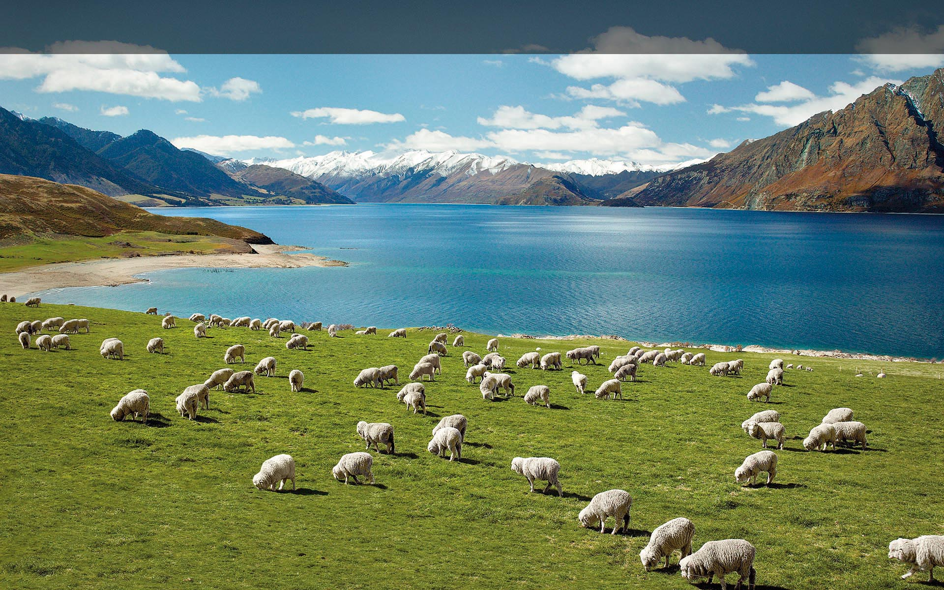 New Zealand Picture: 11 Unique Experiences You Need To Have In New Zealand